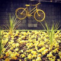 yellow bike and flowers (Tour de France)